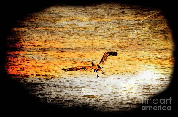 Puerto Plata Photograph - Pelican Landing At Puerto Lopez by Al Bourassa