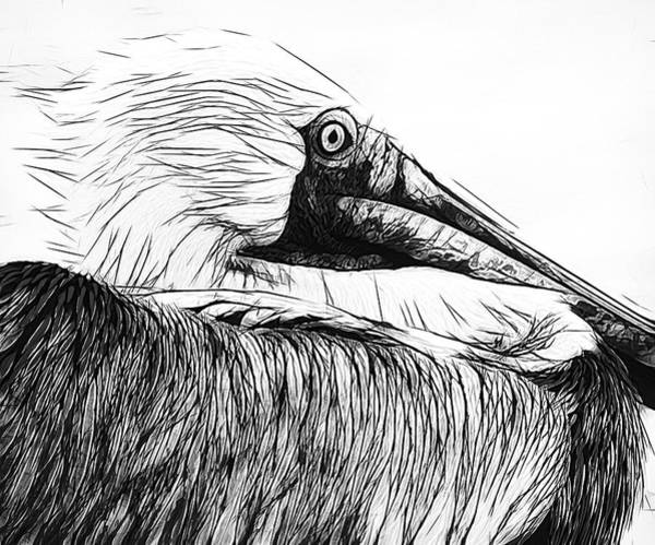 Photograph - Pelican Lines by Alice Gipson