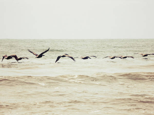 Photograph - Pelican by Michael Colgate