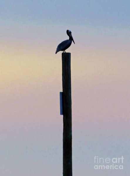 Photograph - Pelican On A Post by D Hackett