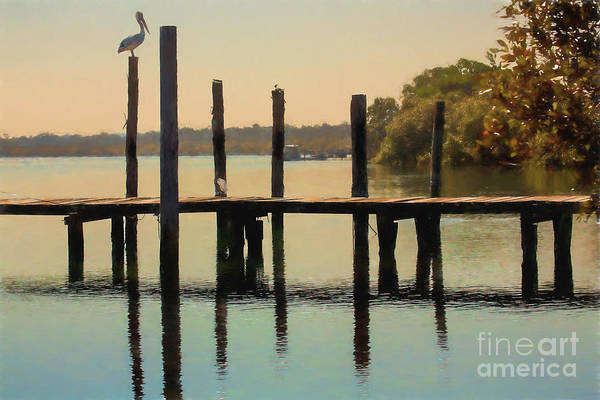 Wall Art - Photograph - Pelican On Post by Sheila Smart Fine Art Photography