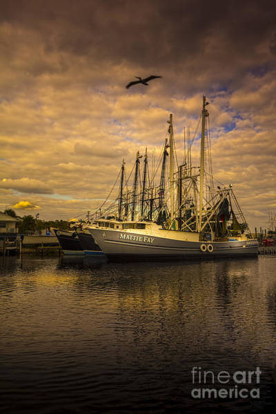 Wall Art - Photograph - Pelican Over Mattie Fay by Marvin Spates