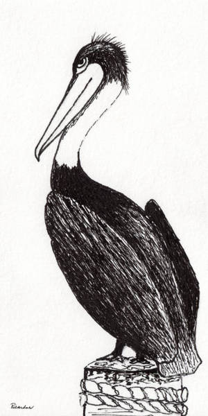 Drawing - Pelican Paradise Portrait In Ink C2 by Ricardos Creations