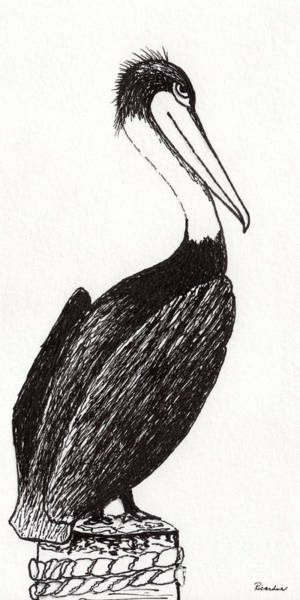 Drawing - Pelican Paradise Portrait In Ink C2l by Ricardos Creations