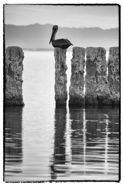 Sonny Bono Wall Art - Photograph - Pelican Perch II by Linda Dunn