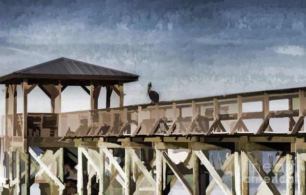 Photograph - Pelican Perch by Roberta Byram
