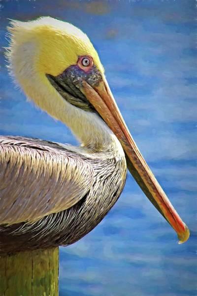 Photograph - Pelican Profile by Alice Gipson