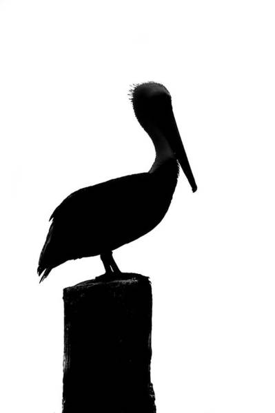 Photograph - Pelican Silhouette 2007 01 by Jim Dollar