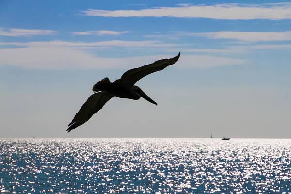 Photograph - Pelican Silhouette by Bob Slitzan