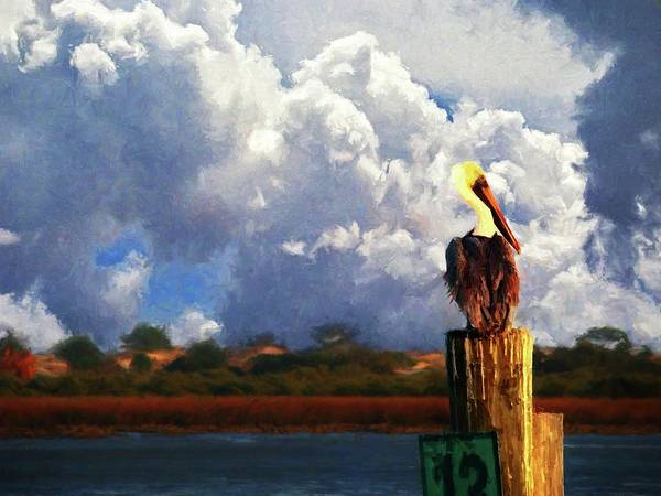 Flagler Photograph - Pelican Storms by Alice Gipson