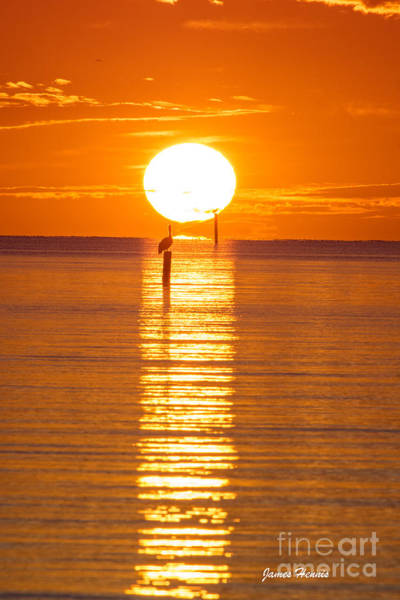 Photograph - Pelican Sunset by James Hennis
