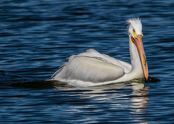 Wall Art - Photograph - Pelican Wake by Dawn Key