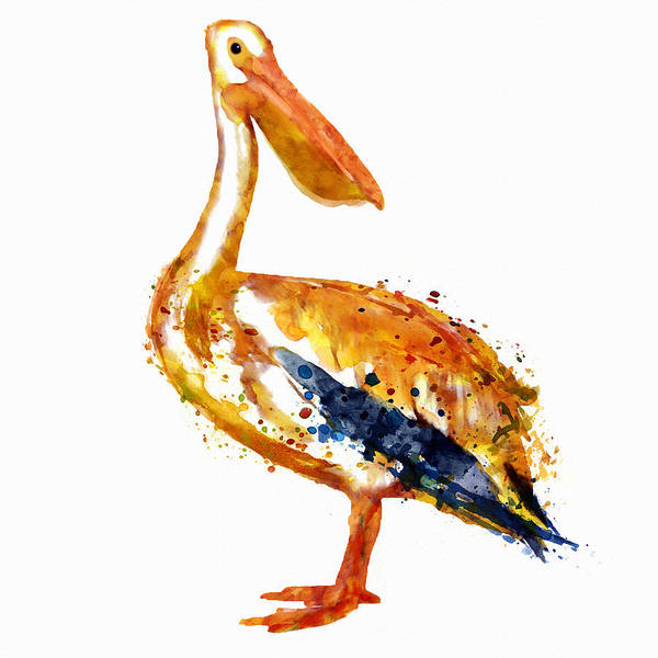 White Pelican Wall Art - Painting - Pelican Watercolor Painting by Marian Voicu