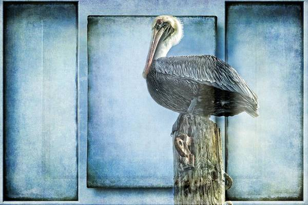 Photograph - Pelicano Inset by Alice Gipson