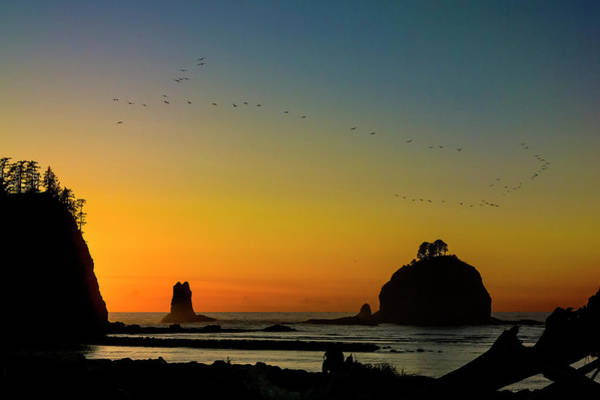 Photograph - Pelicans And Sunset At James Island by Greg Reed