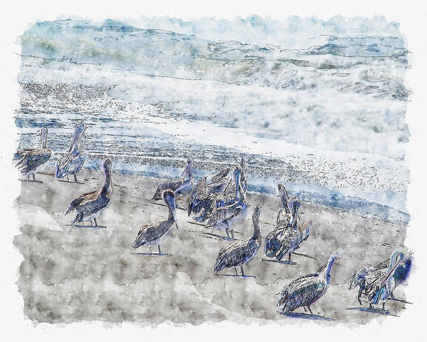 Digital Art - Pelicans by Anthony Murphy