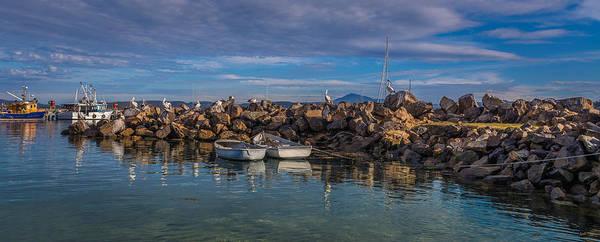 Photograph - Pelicans At Eden Wharf by Racheal Christian