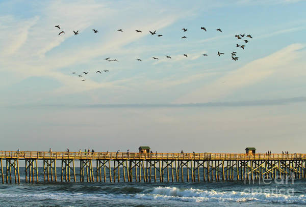 Flagler Beach Photograph - Pelicans At Flagler Beach by Deborah Benoit