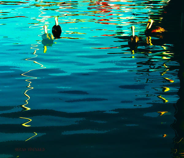 Photograph - Pelicans In Key West by Susan Vineyard