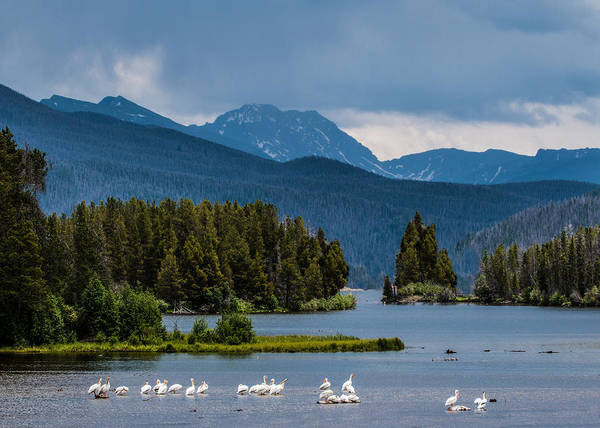 Wall Art - Photograph - Pelicans Of Shadow Mountain by Dawn Key