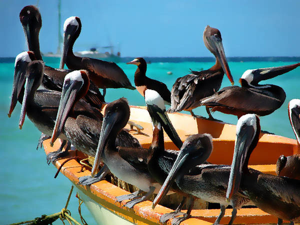 Pelicans Wall Art - Photograph - Pelicans On A Boat by Bibi Rojas