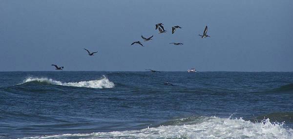 Wall Art - Photograph - Pelicans Over The Atlantic by Teresa Mucha