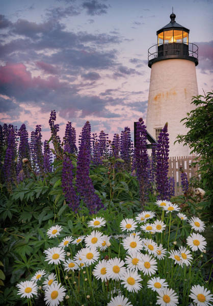 Photograph - Pemaquid And Flowers by Darylann Leonard Photography