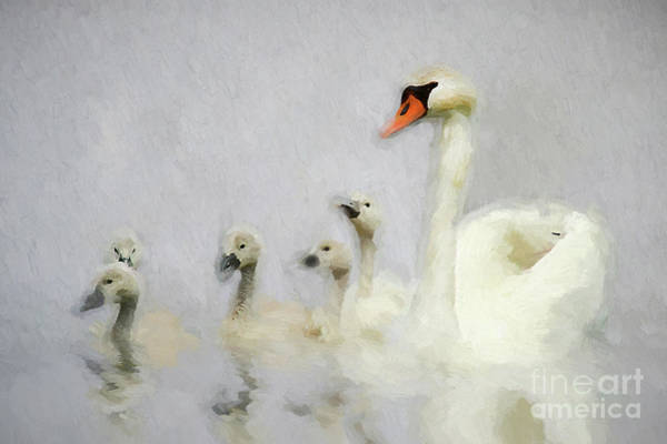 Wall Art - Photograph - Pen And Her Cygnets by Darren Fisher