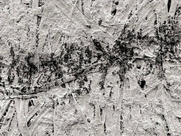 Carbon Fiber Photograph - Pencil Line On Bond Paper by Scimat