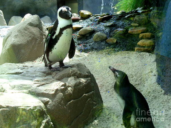Photograph - Penguin Friends by Jeanne Forsythe