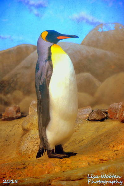 Photograph - Penguin by Lisa Wooten