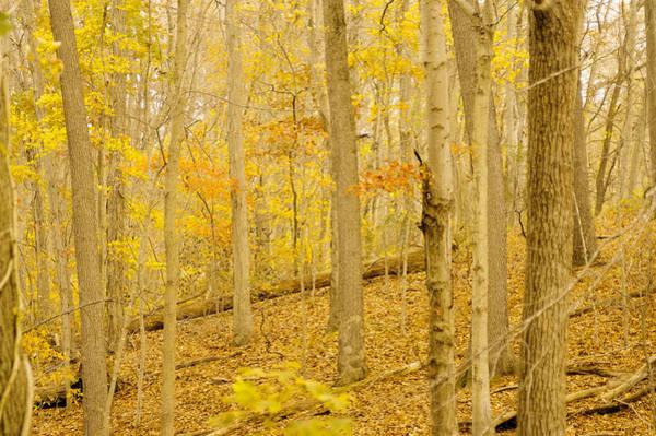 Photograph - Pennsylvania Woodland by Susan Maxwell Schmidt