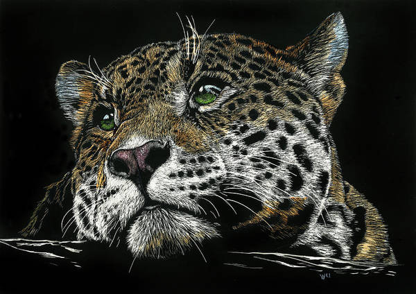 Drawing - Pensive Leopard by William Underwood