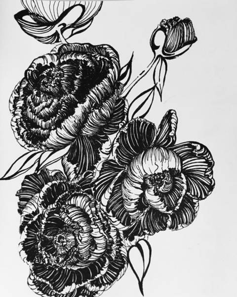 Drawing - Peonies Line Drawing by Mastiff Studios