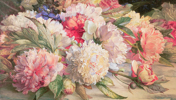 Close-up Painting - Peonies by William Jabez Muckley