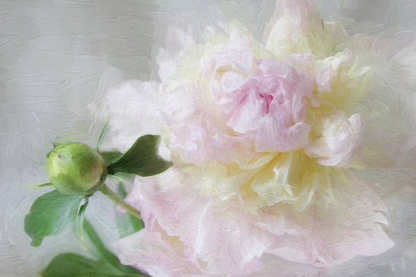 Photograph - Peony 7 by Karen Lynch