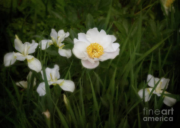 Photograph - Peony And Irises by Ann Jacobson
