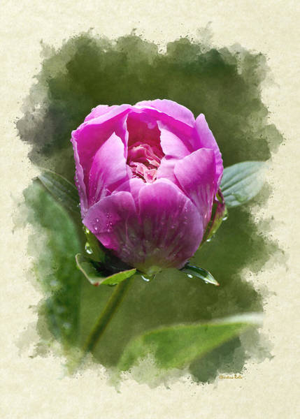 Photograph - Peony Flower Blank Note Card by Christina Rollo