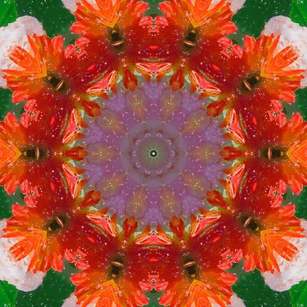 Photograph - Peony Kaleidoscope 2 by Natalie Rotman Cote