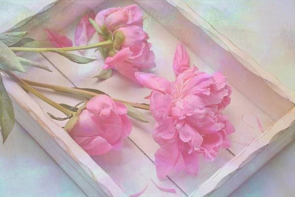 Photograph - Peonies In White Box by Diane Alexander