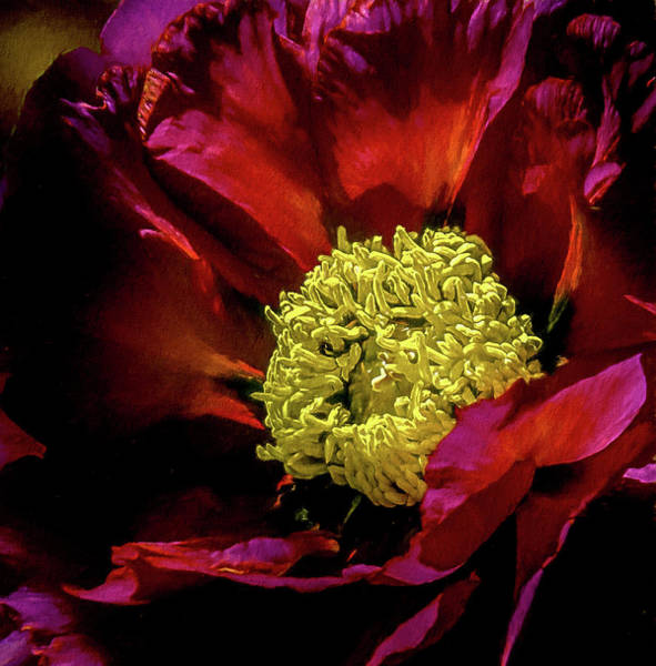 Photograph - Peony Macro Red by Julie Palencia