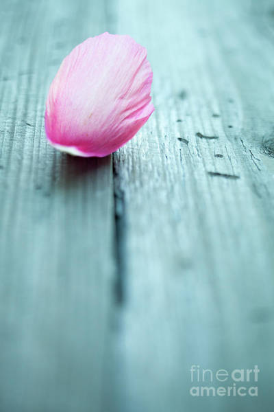 Wall Art - Photograph - Peony Petals by Kati Finell