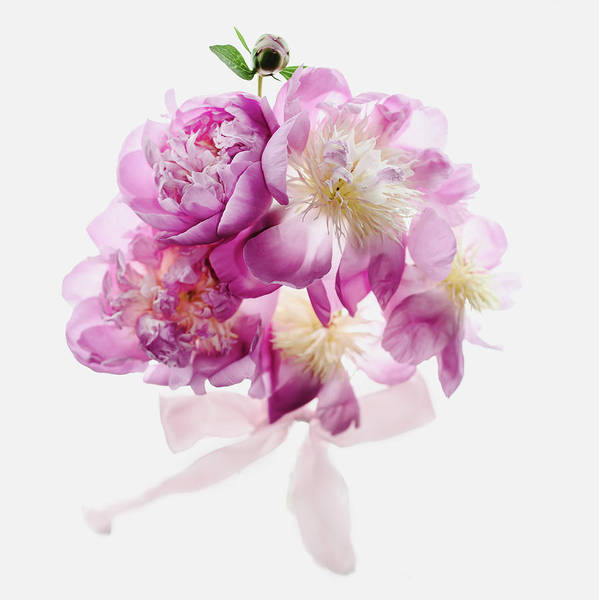 Wall Art - Photograph - Peony Pink Squared by Rebecca Cozart