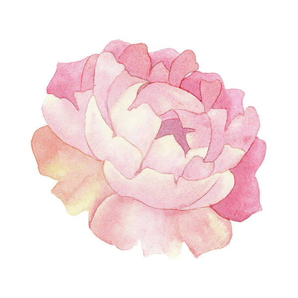 Painting - Peony Watercolor  by Zapista Zapista