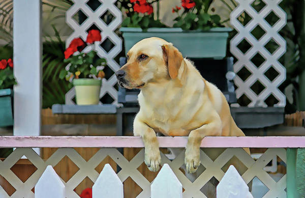 Service Dog Photograph - People Watching by HH Photography of Florida