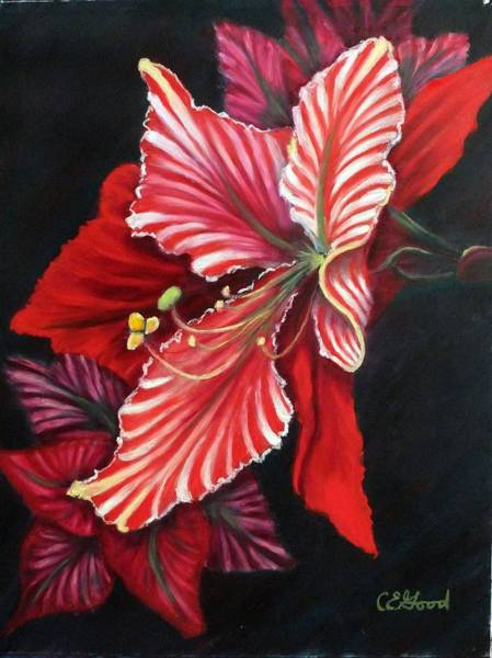 Red Amaryllis Painting - Peppermint by Charlie Good