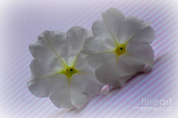Photograph - Peppermint Petunias by Donna Bentley