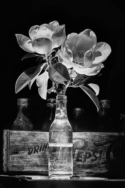 Photograph - Pepsi Bottle And Magnolia Still Life by JC Findley