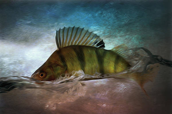 Sportsman Digital Art - Perch Jumping Painting - Fishing Gifts Part03 by Jean-Pierre Prieur