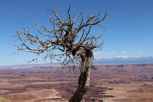 Photograph - Perched Above The Canyons  by Christy Pooschke